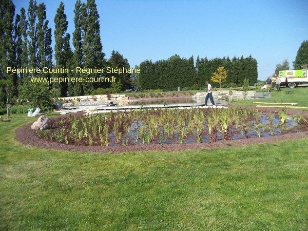 plantes aquatiques dans un bassin
