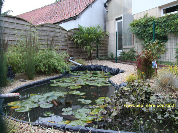 une autre vue du bassin de jardin pour poissons rouges