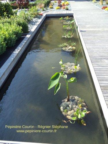 plantes aquatiques au fond du bassin