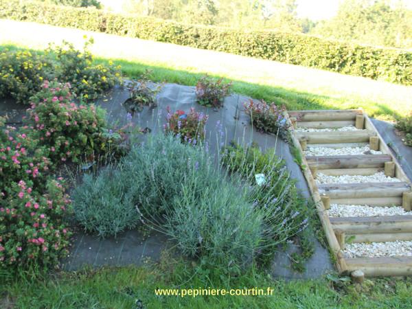 escalier dans un écrin végétal