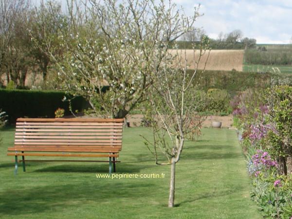 arbres fruitiers de nos r gions. Black Bedroom Furniture Sets. Home Design Ideas