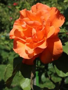 rosier buisson Doris Tysterman