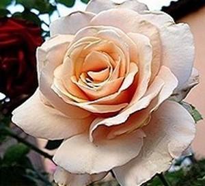 rosier buisson Paul Ricard