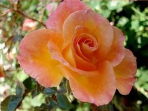 rosier buisson rochemenier village