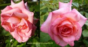 rosier buisson Zoé Félix