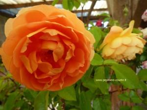 rosa-pat-austin
