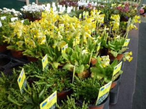 arrivage plantes vivaces