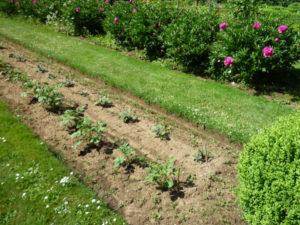 entretien jardin service la personne
