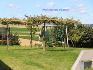 gazon et une pergola arbres ornement