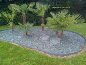plusieurs palmiers dans un massif de graviers d'ardoises