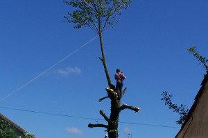 abattage élagage arbre